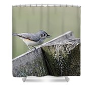 Tufted Titmouse With Seed Shower Curtain