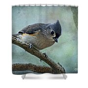 Tufted Titmouse With Snowflake Decorations Shower Curtain
