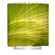 Tufts Of Ornamental Grass Shower Curtain