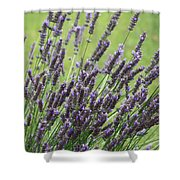 Tuilieres Lavender Shower Curtain