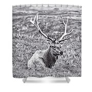 Tule Elk In Black And White  Shower Curtain