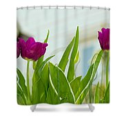 Tulip 4 Shower Curtain