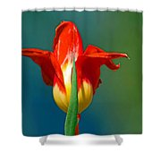 Tulip 5 Shower Curtain