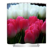 Tulip 7 Shower Curtain