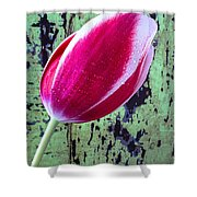 Tulip Against Green Wall Shower Curtain