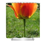 Tulip Backlit 14 Shower Curtain