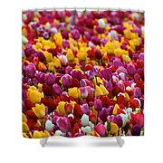 Tulip Bud Farm Portrait Shower Curtain