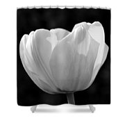 Tulip Bw Shower Curtain