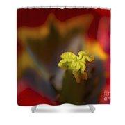 Tulip Center Shower Curtain