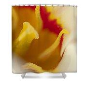 Tulip Close Up 1 Shower Curtain