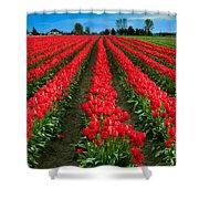 Tulip Cornucopia Shower Curtain