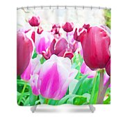 Tulip Delight Shower Curtain