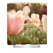 Tulip Dreams Shower Curtain