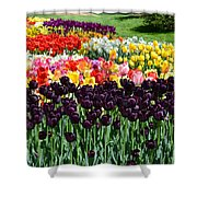 Tulip Field 1 Shower Curtain