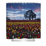 Tulip Field's Last Colors Shower Curtain