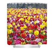 Tulip Flower Festival Art Prints Spring Shower Curtain