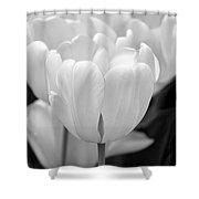 Tulip Flowers In The Garden Monochrome Shower Curtain