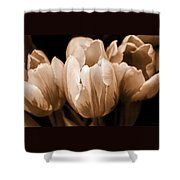 Tulip Flowers Sepia Monochrome Shower Curtain