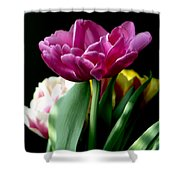 Tulip For Easter Shower Curtain