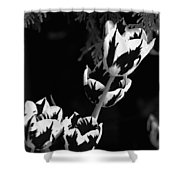 Tulip Group In Black And White Shower Curtain