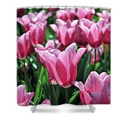 Tulip Heaven Shower Curtain