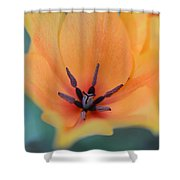 Tulip In Orange Shower Curtain