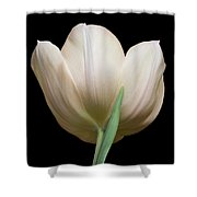 Tulip #2 Shower Curtain