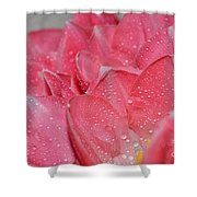 Tulip Lacery Shower Curtain