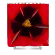 Tulip Macro 1 Shower Curtain
