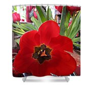 Tulip Mania 19 Shower Curtain