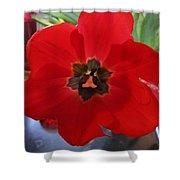 Tulip Mania 20 Shower Curtain