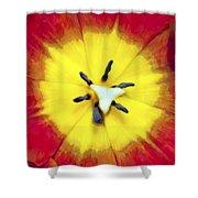 Tulip Nucleus Shower Curtain