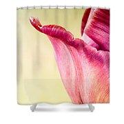 Tulip Petal Shower Curtain