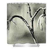 Tulip Poplar Empty Seed Heads - Black And White Shower Curtain