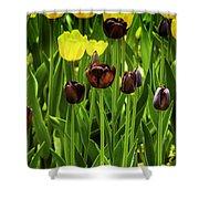 Tulip Race Time Shower Curtain