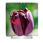Tulip Rave Shower Curtain