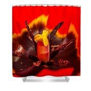 Tulip Stamp Shower Curtain