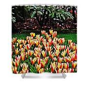 Tulip Stripe Garden Shower Curtain
