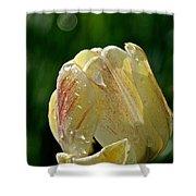 Tulip Teardrops  Shower Curtain