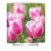 Tulip Time Shower Curtain by Angela Doelling AD DESIGN Photo and PhotoArt