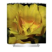 Tulip Time Hopeless Love Shower Curtain