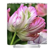 Tulip Time Pink And White Shower Curtain