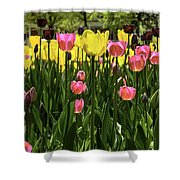 Tulip Time Pink Yellow Black Beauty Shower Curtain