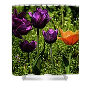 Tulip Time Purple And Orange Shower Curtain