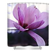 Tulip Tree Blooming Shower Curtain