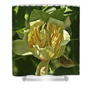 Tulip Tree Shower Curtain