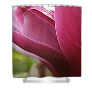 Tulip Tree Flower With Raindrops Shower Curtain