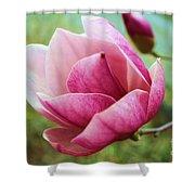Tulip Tree In Bloom Shower Curtain