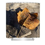 Tulip Tree Leaf - Frozen Raindrops In The Sunshine Shower Curtain