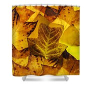 Tulip Tree Leaves In Autumn Shower Curtain